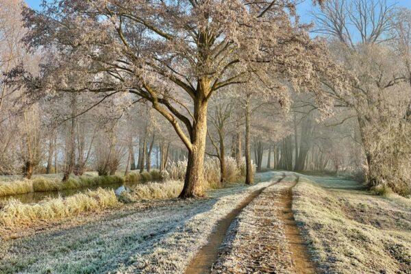 Frostwiesen-Lauf ab Samstag, den 23.01.2021 bis 28.02.2021 zu Hause